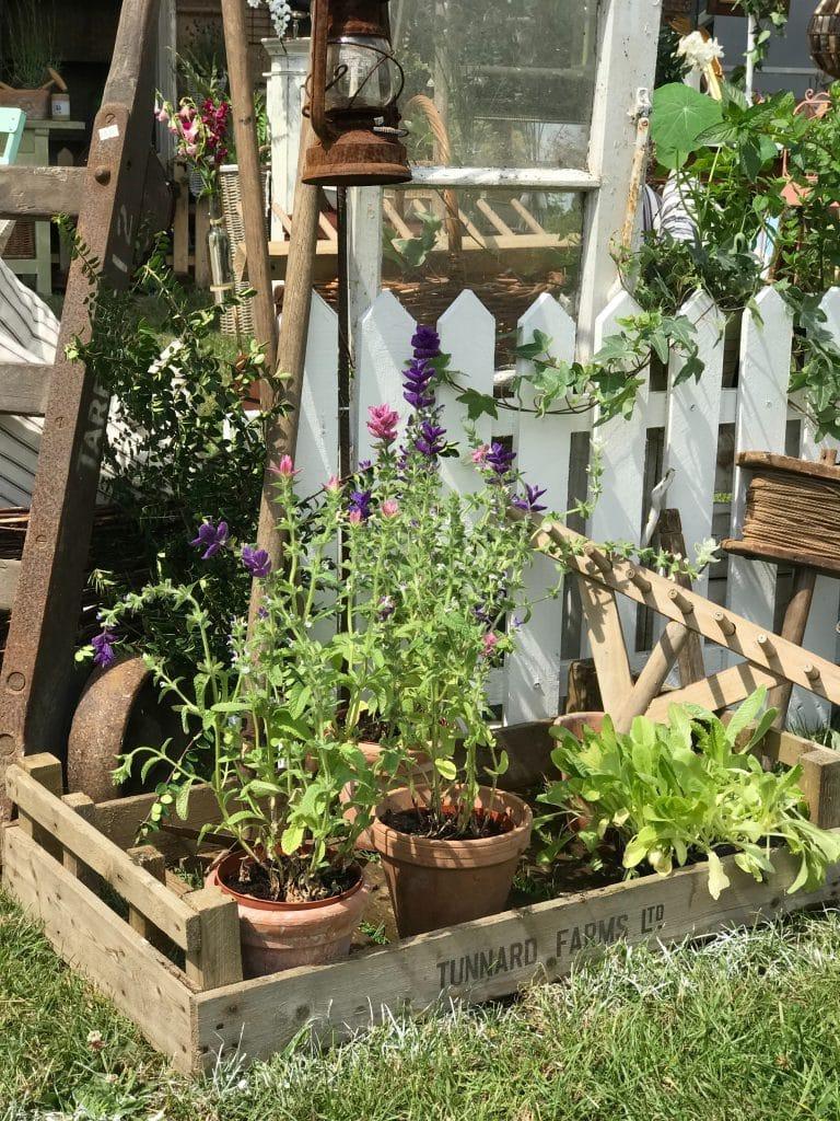 plantes et caissettes avec échelle près d'une barrière blanche
